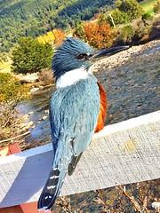 Martn Pescador #ChileanPatagonia #Patagonia (mr_strangeworld) Tags: chileanpatagonia patagonia