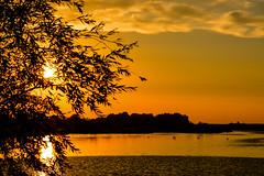 Golden hour (Jaco Verheul) Tags: sun sunset gold color colour dusk water lake river bird nikon d7100 nikond7100 jacoverheul tree serene cloud clouds cloudporn outdoor landscape waterscape 1685 ngc twop nature