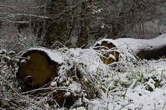 ckuchem-8070 (christine_kuchem) Tags: asthaufen baumstamm eis forst frost haufen holz staatsforst stmme tiere unterschlupf wald wasser wildnis winter winterschlaf winterwald gefroren gewsser kalt naturnah reif schnee wild ste