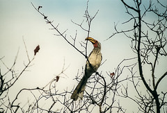 Bird (Stefania Pascucci) Tags: nikonf3 sudafrica