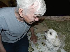 Daily Dog Challenge - Dreamy (marilyntunaitis) Tags: jack bella 365days2015photoadaychallenge dailydogchallengedreamy
