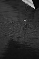 drain the rain (cyngrand) Tags: water rain interesting drain gutter splash waterdrops