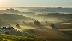 Misty sunrise in Verduno (CN) - Italy (Attilio Piselli) Tags: morning sky italy mist misty sunrise wow landscape vineyard foggy unesco piemonte goldenhour langhe roddi verduno
