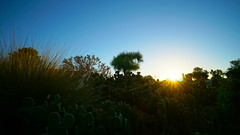 Cactus Morning (DoubleIris) Tags: life blue light sunset sky orange cloud sun mountain mountains color love nature colors beautiful sunshine yellow clouds sunrise landscape happy landscapes amazing bright outdoor gorgeous sony awesome joy sunny cloudporn breathtaking inspiring beautifulday amazingnature sonyalpha sonyimages sonya6000