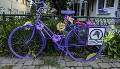 7242 Purple Bike (savedrev) Tags: oceangrove d7000 newjersey nikon