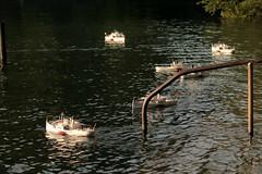 Modell eines Dampfschiff - Raddampfer gebaut mit Thuner Ferienpass unter Mithilfe vom Modell Boot Club Thun MBCT im Lachenkanal des Thunersee bei Thun im Berner Oberland im Kanton Bern der Schweiz (chrchr_75) Tags: hurni christoph schweiz suisse switzerland svizzera suissa swiss chrchr chrchr75 chrigu chriguhurni chriguhurnibluemailch juli 2016 juli2016 modell modellschiff modellschiffe modellbau schiff ship bateau albummodellschiffeinderschweiz