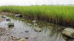 Great Neck, Ipswich, MA. (dckellyphoto) Tags: reeds grass water rocks pebbles shore shoreline salt marsh saltmarsh ipswich ipswichma ipswichmassachusetts greatneck littleneck innsmouth reflect reflection shallow ocean massachusetts newengland beautyofwater