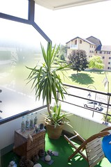 MY PLANTS FLAT 36,5 DEGREES OUTDOOR (JEANPHI2206) Tags: nyc paris france boston gold switzerland san suisse sfo montreal zurich border diego monaco bern lax frontiere montres banques