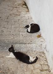 In the Casbah of Algiers (Sylviane Moss) Tags: cats algeria casbah algrie algiers kasbah alger