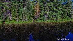 (Vital Films1) Tags: mewlake mewlakealgonquinpark algonquinpark ontarioprovincialpark forest wildlife wilderness water lake djiphantom3 drone cameradrone birdseyeview overhead airbourne phantom3