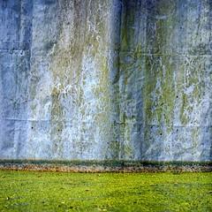 Entengrtze 3 (dedalus11) Tags: green nature blue entengrtze wasser water natur natura duckweed see grn vert weed art abstrait abstrakt kunst wasserlinsengewchse wasserlinsen waterlens lemnoideae aquaticplants plants flora bayroot