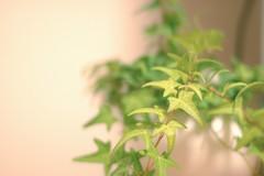 Green  (yu*ki) Tags: d70 nikkor14 nikond70 lightroom flashair