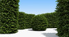 Boxwood Hedges Ultimate Set (oleg_scolt) Tags: plant hedge shrub garden topiary park bush nature foliage leaf boxwood buxus fence visualization exterior 3d green set collection greenary pruning