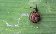 creating a sine wave (mimbrava) Tags: snail landsnail mollusk lookslikeacinnamonbun mucoustrail arr allrightsreserved mimeisenberg mimbrava mimbravastudio