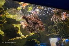 FujiXE2-0195 (QTTheory) Tags: cvg cincinnati ohio newport aquarium newportaquarium fujifilm fujinon xe2 xf 1855mmf284rlmois