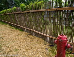 """""""A Living Fence"""" #HFF (maureen.elliott) Tags: happyfencefriday fence greenery living growing"""