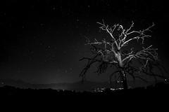 Starry Night (M. Drago) Tags: stars star tree trees stelle albero alberi notte night bw bianco nero black white north biella candelo italy italia baraggia stellata starry