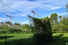 Building site (petrOlly) Tags: europe europa poland polska polen tricity tricityarea trjmiasto pomorze sopot fence landscape plants plant
