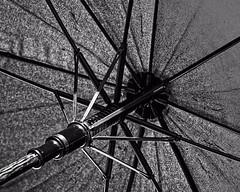 Umbrella Abstract (DASEye) Tags: davidadamson daseye nikon umbrella abstract 52in2016 52in2016challenge challenge bw artistic artisticbw