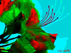 azalea (Sonja Parfitt) Tags: flower layered manipulated
