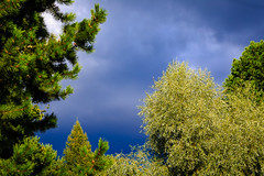 Dark sky (Lena_CS) Tags: sky skies blue cloud clouds tree trees green summer