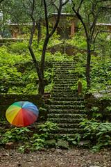 Matheran-5402 (Satish Chelluri) Tags: satishchelluri satishchelluriphotography matheran maharastra umbrella mansoon