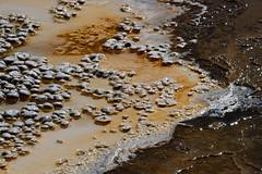 _DSC8236 (DianeBerky19) Tags: nikondf wy jacksonholewyoming yellowstonenationalpark springs