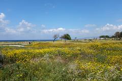 (Stassia) Tags: park travel flowers blue sky cloud nature landscape spring blossom cyprus april paysage paphos
