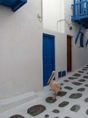 Petros the pelican (Blaz Purnat) Tags: pelican greece grecia pelikan griechenland grce mykonos mikonos grcia yunanistan myconos grekland grecja kreikka grezia grcia   griekeland grkenland grka grgorszg petrosthepelican  ecko grcko  greqia   grija      mkonos yunanstan
