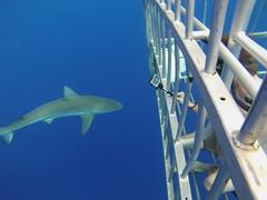 Northshore Shark Cage (Tony Shi, Life) Tags: hawaii oahu northshore sharks sharkcage