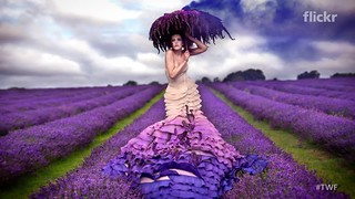 The Weekly Flickr - Kirsty Mitchell