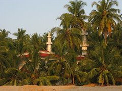 Kannur district, Kerala, India, Asia, North-Kerala, Indien, Asien (oksana8happy) Tags: copyright india asia asien heiconeumeyer islam faith religion kerala mosque palmtrees palmtree palme indien masjid coconutpalm southindia southasia copyrighted palmen glaube moschee coconutpalms kannur kokosnusspalme kokospalme cannanore northkerala coconutpalmtree südindien coconutpalmtrees südasien nordkerala kannurdistrict