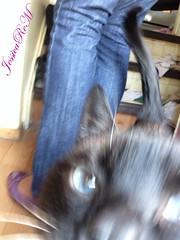 IMG_1822-1s (JessicaReM) Tags: blue cat purple cd siamese crossdressing transgender flats jeans denim puma trans transgendered crossdresser chocolatepoint balletflats crossdressed mior