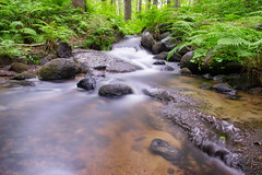 Flowing Stream (laurilehtophotography) Tags: stream flow longexposure haida nd neutraldensity water forest grass green rocks nature naturephotography nikonphotography nikon d3100 nikkor 1755mm f28g rain rainyday rutalahti suomi finland koski koskikarankierros luonto