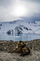 Perrito de Montaa (ANDYFOTEIKER) Tags: embalse el yeso cajon del maipo sergio mella region metropolitana santiago chile turismo nieve montaa viajes