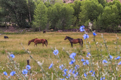 Can't Complain (krelovichm) Tags: flower horses mountains western colorado rifle