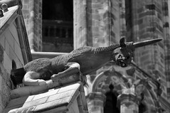 Cathedral (Parkinsonian Sprayer) Tags: gargoyle gargouille gotic gothic barri barcelone barcelona catedral cathedral