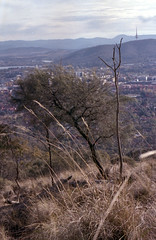 raw0067 (squid.bert) Tags: film bushwalking canberra nikonfm sunny16 hillvale