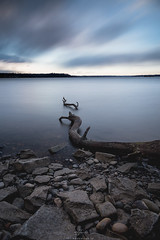 Roots (Thomas | Barton) Tags: longexposure light sky tree green nature water clouds sunrise canon river landscape rocks shore potomac root 24105 thomasbarton