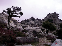 Following the fresh dots and new cairns back to Erifi plateaubase (2) (angeloska) Tags: ikaria hikingtrails opsikarias aegean greece signage    ryakas geli   december