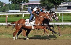 Dolphins (1/2 to Rachel Alexandra) works at Saratoga (Rock and Racehorses) Tags: webdolphusska4962sarahandrew ny thoroughbred myra racehorse saratoga nyra dolphus lottakim