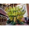 Its the last Sunday of March 2015.  Today is Palm Sunday.  #Sunday #church #Lent #pray #faith #worship #love #devotion #igerspinoy #igersmanila #SemanaSanta