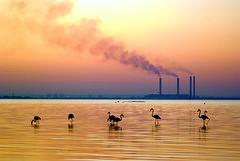 Flamingos (Azarbhaijaan) Tags: kuwait trade zone kuwaitcity pakistaniphotographer pentaxk10d azharmunir