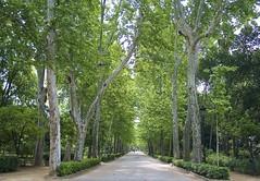 Walking / Paseando (LourdesBS) Tags: park trees verde sevilla rboles camino path gree parquemarialuisa