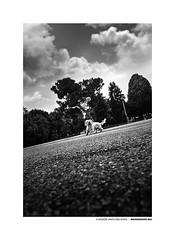 Massimiliano_Baj_06