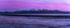 PINK SALMON (Traylor Photography) Tags: ocean sunset panorama snow mountains nature alaska clouds landscape spring south tide salmon anchorage spawn 70300mm cookinlet