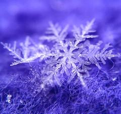 Springtime Snowflakes (jilllian2) Tags: snowflake ice spring icecrystals iphone snowcrystal stillsnowing olloclip