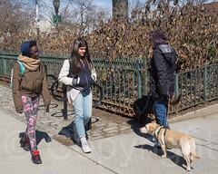 Bennett Park, Washington Heights, New York City (jag9889) Tags: park nyc newyorkcity winter usa dog ny newyork animal unitedstates manhattan unitedstatesofamerica pedestrian creature streetscape washingtonheights nycparks wahi 2015 publicpark newyorkcitydepartmentofparksrecreation jag9889 20150324