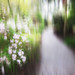 Through pleasant paths, through dainty ways,  Love leads my feet