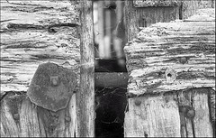 stivaletti ;/) (schyter) Tags: camera bw slr 35mm lens monocromo kodak trix bn negative homemade 400 soviet epson format ttl v600 135 kiev lightmeter arsenal negativo development bianconero onboard 250 analogica lodi analogic blackwithe 24x36 lodigiano adox adonal 320iso kiev19m argentica nikonbayonet basiasco arsath homemadescanned 19m
